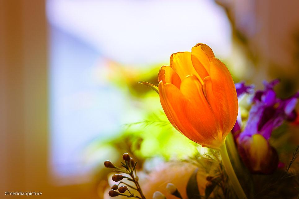 Tulpenfenster