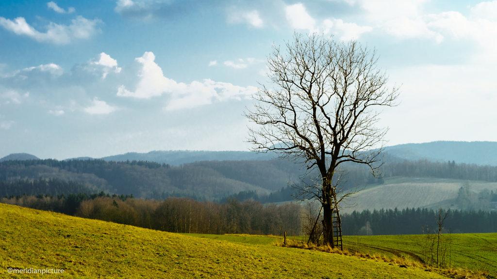 Baum mit Hochstand
